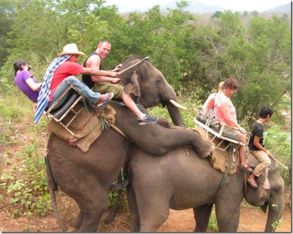 Hump Day Safari
