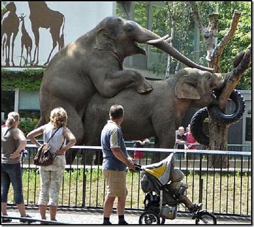 elephantglory