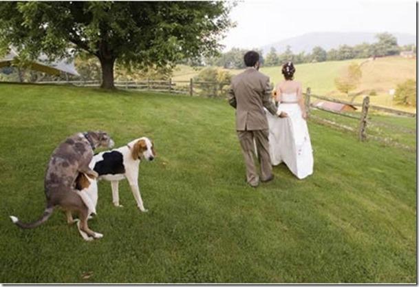 a97105_g071_4-dog-love